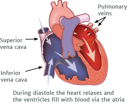 During diastole the heart relaxes and the ventricles fill with blood via the atria