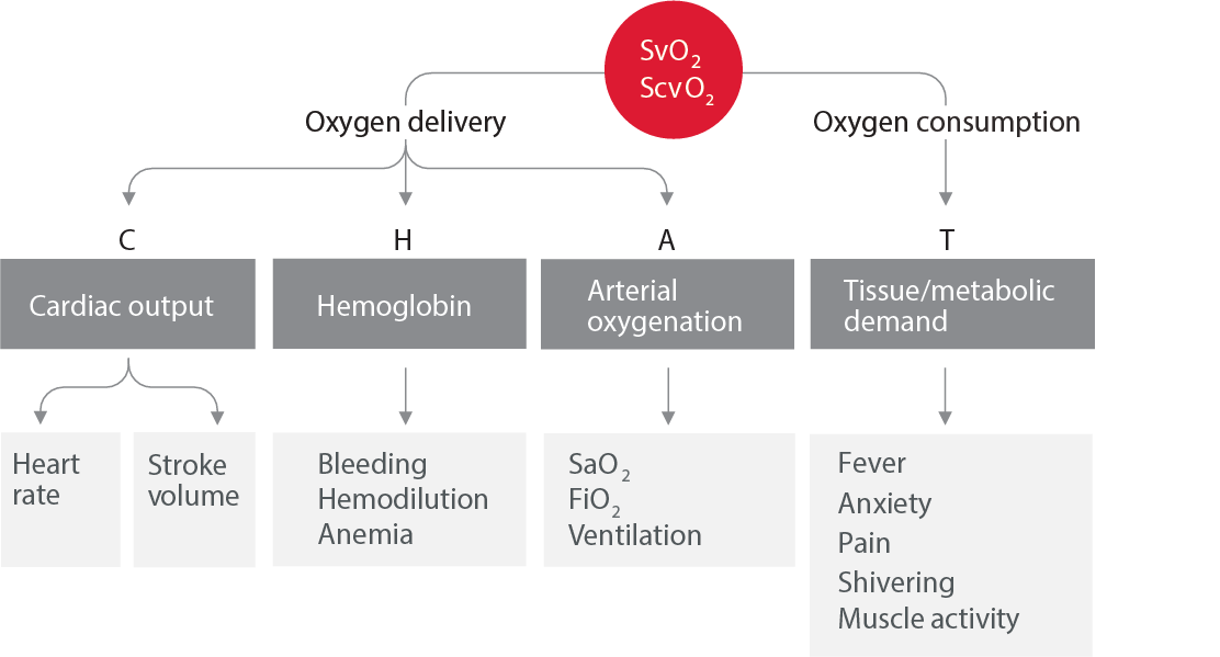Balance of oxygen delivery and consumption