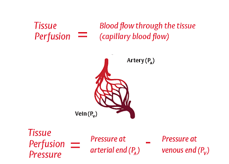 Adequate perfusion requires adequate arterial pressure and cardiac output (CO)